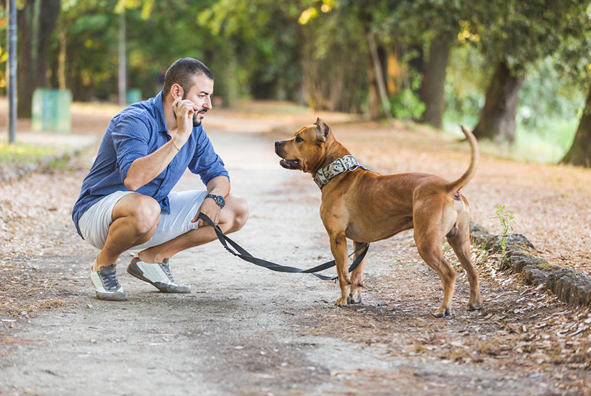 Tel maître, tel chien