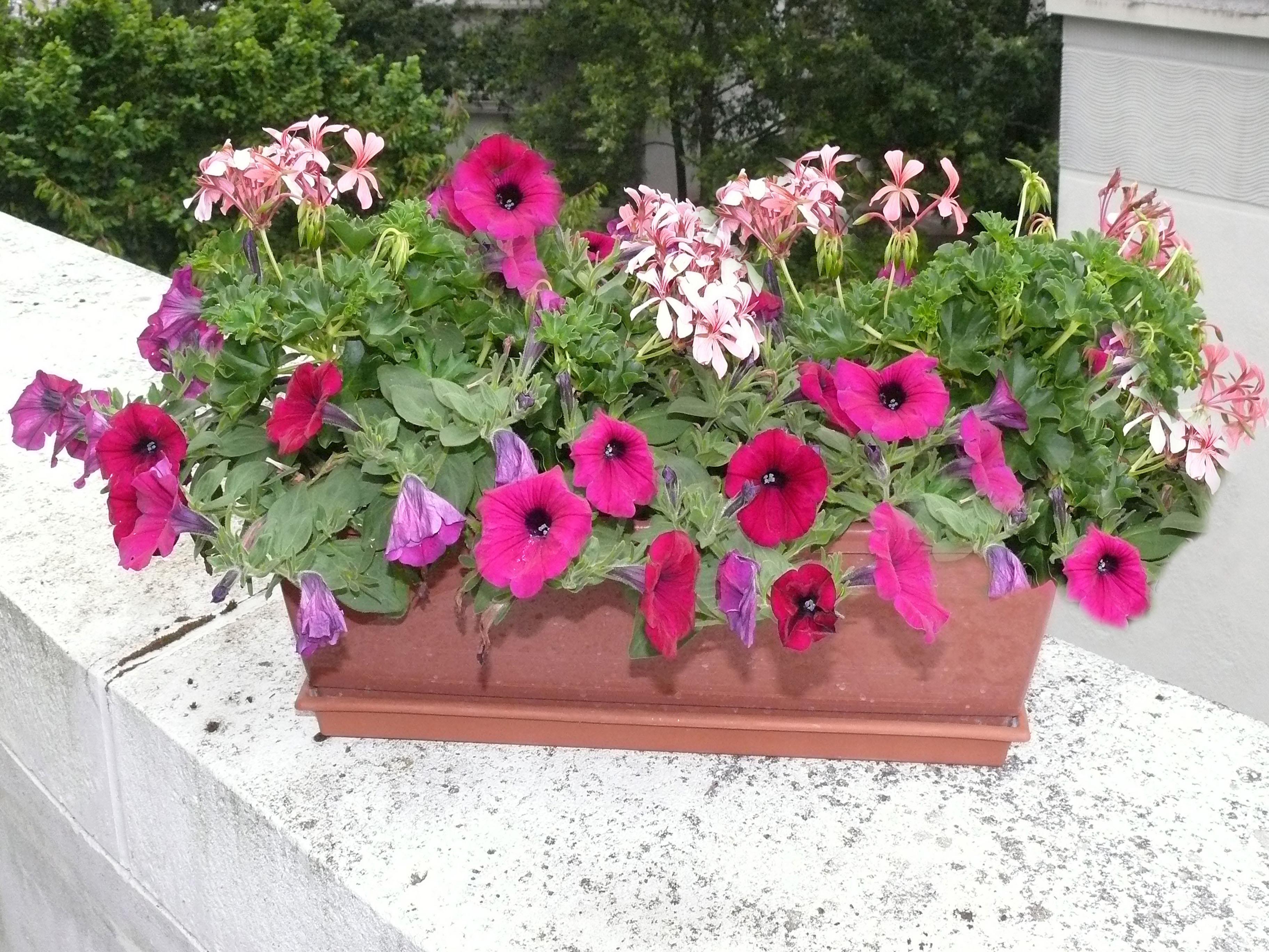 Jardinières fleuries : livraison le 4 mai