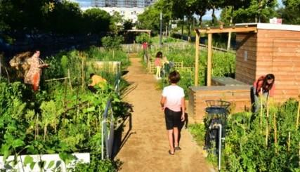 PROJET 3 : Création d'un jardin partagé
