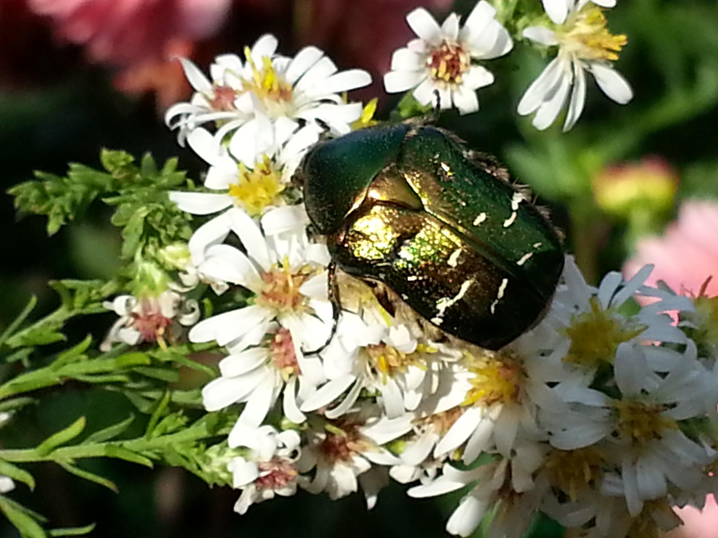 Flore et faune de chez nous