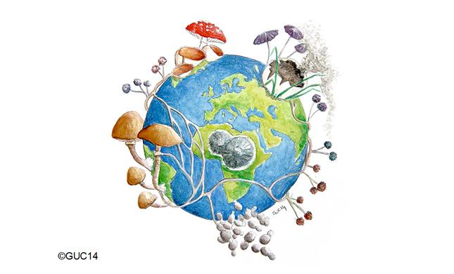 L'univers fascinant des champignons