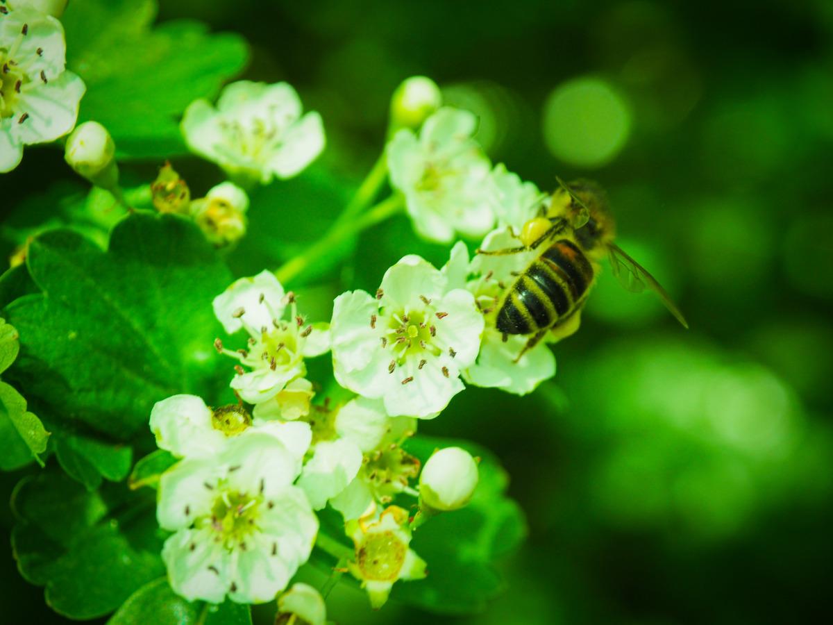 Plantons des fleurs pour les abeilles